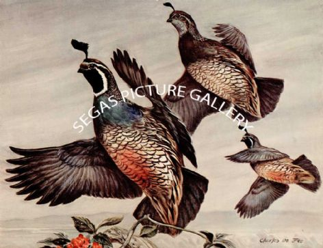 Fine Art Print of the Valley Quail by Charles Defeo (1891-1978)